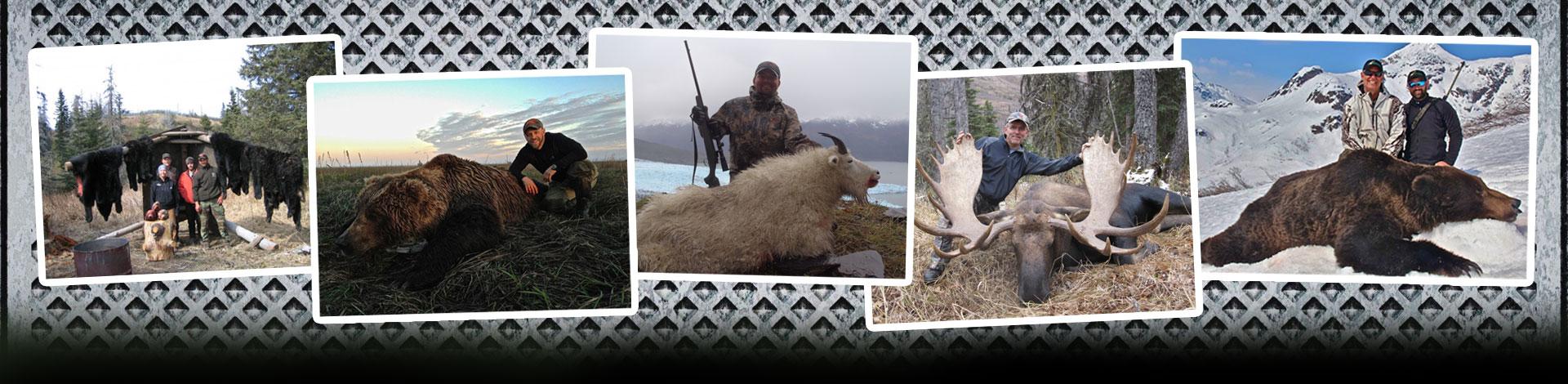 Alaska unit 14c trophy sheep hunt home unit 14c trophy dall sheep hunt sciox Choice Image