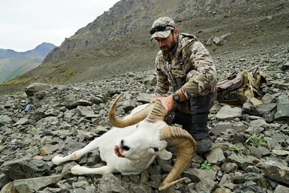 Alaska unit 14c trophy sheep hunt packing and just living in sheep country much more comfortable for us and our guides sheep hunting is not a job but an obsession sciox Choice Image