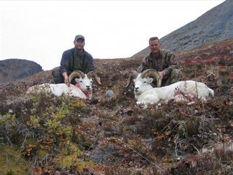 Alaska unit 14c trophy sheep hunt travel sciox Choice Image